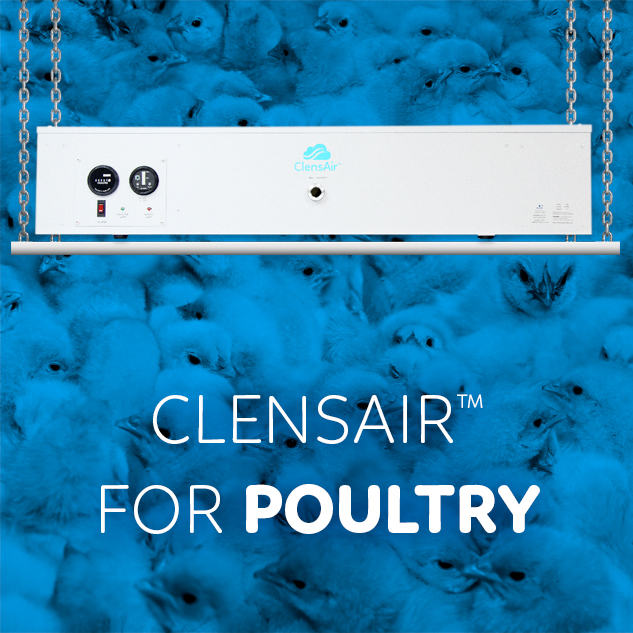 ClensAir™ for chicks