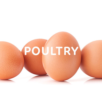 poultry growers