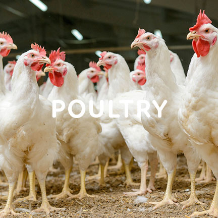 poultry processors