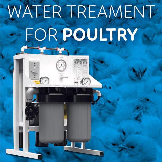Water Treatment for chicks
